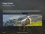 Female Sheep with Lamb Presentation slide 10