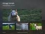 Female Sheep with Lamb Presentation slide 13