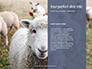 Female Sheep with Lamb Presentation slide 9