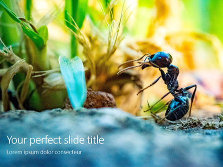 A Busy Small Ant Presentation Presentation Template, Master Slide