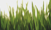 Close Up of Fresh Thick Grass Presentation Presentation Template