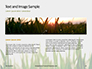 Close Up of Fresh Thick Grass Presentation slide 14