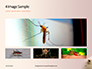 Mosquito on the Skin Presentation slide 13