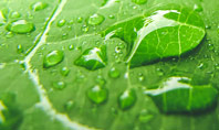 Green Leaf with Drops of Water Presentation Presentation Template