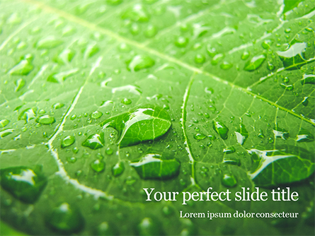 Green Leaf with Drops of Water Presentation Presentation Template, Master Slide