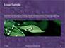 Water Drops on Purple Leaf Presentation slide 10