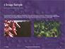 Water Drops on Purple Leaf Presentation slide 11