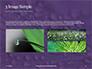 Water Drops on Purple Leaf Presentation slide 12