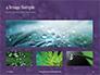 Water Drops on Purple Leaf Presentation slide 13
