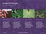 Water Drops on Purple Leaf Presentation slide 16