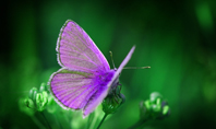 Purple Butterfly on Green Plant Presentation Presentation Template