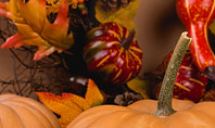 Still Life Harvest with Pumpkins and Gourds for Thanksgiving Presentation Presentation Template