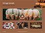 Still Life Harvest with Pumpkins and Gourds for Thanksgiving Presentation slide 13