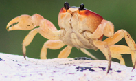 Crab on Rock Presentation Presentation Template