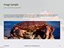 Crab on Rock Presentation slide 10