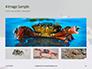Crab on Rock Presentation slide 13