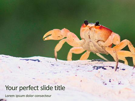Crab on Rock Presentation Presentation Template, Master Slide