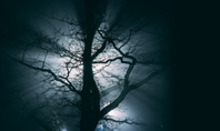 Spooky Night Shot of Tree in Fog Backlit by Streetlight Presentation Presentation Template