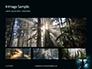 Spooky Night Shot of Tree in Fog Backlit by Streetlight Presentation slide 13