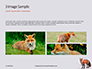 Red Fox in Winter Presentation slide 12