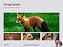 Red Fox in Winter Presentation slide 13