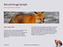 Red Fox in Winter Presentation slide 14