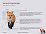Red Fox in Winter Presentation slide 15