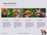 Red Fox in Winter Presentation slide 16
