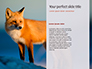 Red Fox in Winter Presentation slide 9