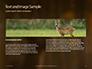 Brown Deer Portrait Presentation slide 14