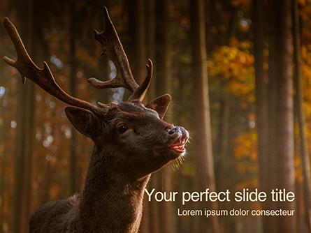 Brown Deer Portrait Presentation Presentation Template, Master Slide