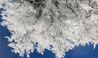 Tree Covered in Snow and Frost Presentation Presentation Template