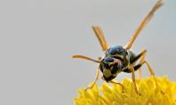 Wasp on a Yellow Flower Presentation Presentation Template