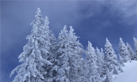 Spruces Tree on Wintry Hill Presentation Presentation Template