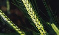 Green Leafed Plant Presentation Presentation Template