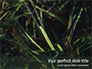 Green Leafed Plant Presentation slide 1