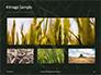 Green Leafed Plant Presentation slide 13