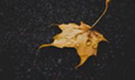 Yellow Wet Leaf on Asphalt Presentation Presentation Template