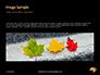 Yellow Wet Leaf on Asphalt Presentation slide 10