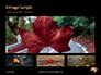 Yellow Wet Leaf on Asphalt Presentation slide 13