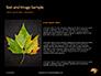 Yellow Wet Leaf on Asphalt Presentation slide 15