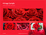 Beautiful Red Rose Close Up Presentation slide 13