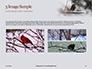 Bullfinch Presentation slide 12