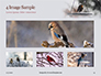 Bullfinch Presentation slide 13