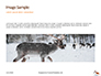 Deer in the Winter Field Presentation slide 10