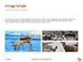 Deer in the Winter Field Presentation slide 12
