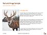 Deer in the Winter Field Presentation slide 15