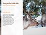 Deer in the Winter Field Presentation slide 9