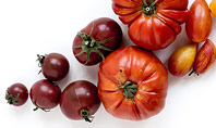 Variety of Ripe Fresh Organic Gardening Tomatoes Presentation Presentation Template