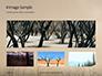 Charred Forest Presentation slide 13